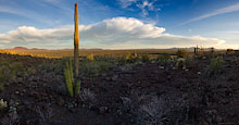 Organ Pipe Panorama